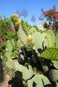 0544 cactus